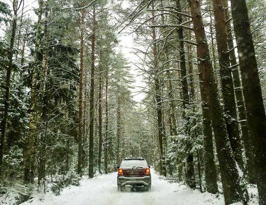 russian-winter-forrest-2